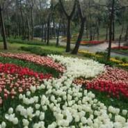 Parc de Yildiz (Yildiz Parki)